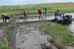 Lavoro del trattorino nelle risaie ed i ragazzi le rifiniscono con l'angady, simile alla nostra vanga